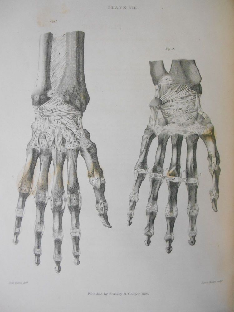 A Treatise on Ligaments. Bransby B. Cooper, John Graves.