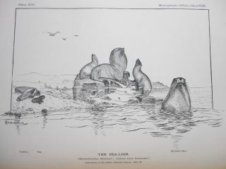 Report on the Seal Islands of Alaska